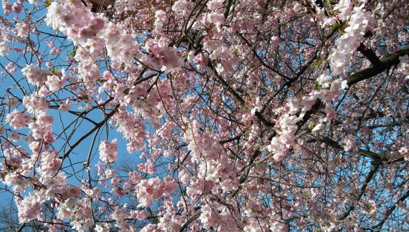 Vítání léta – body and mind…piknik v přírodě
